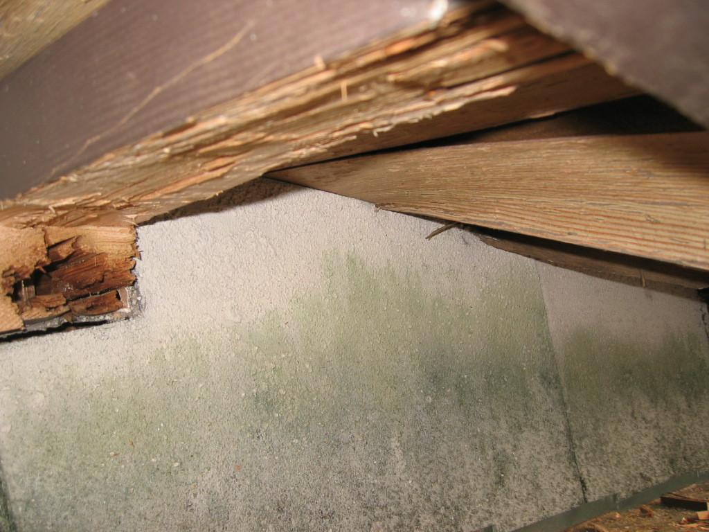 施工中 木部 母屋腐りのため 一部除去