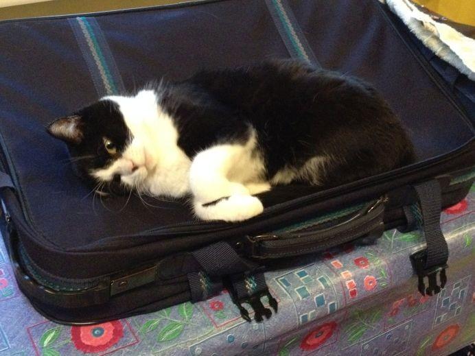Koffertest - super Sache!