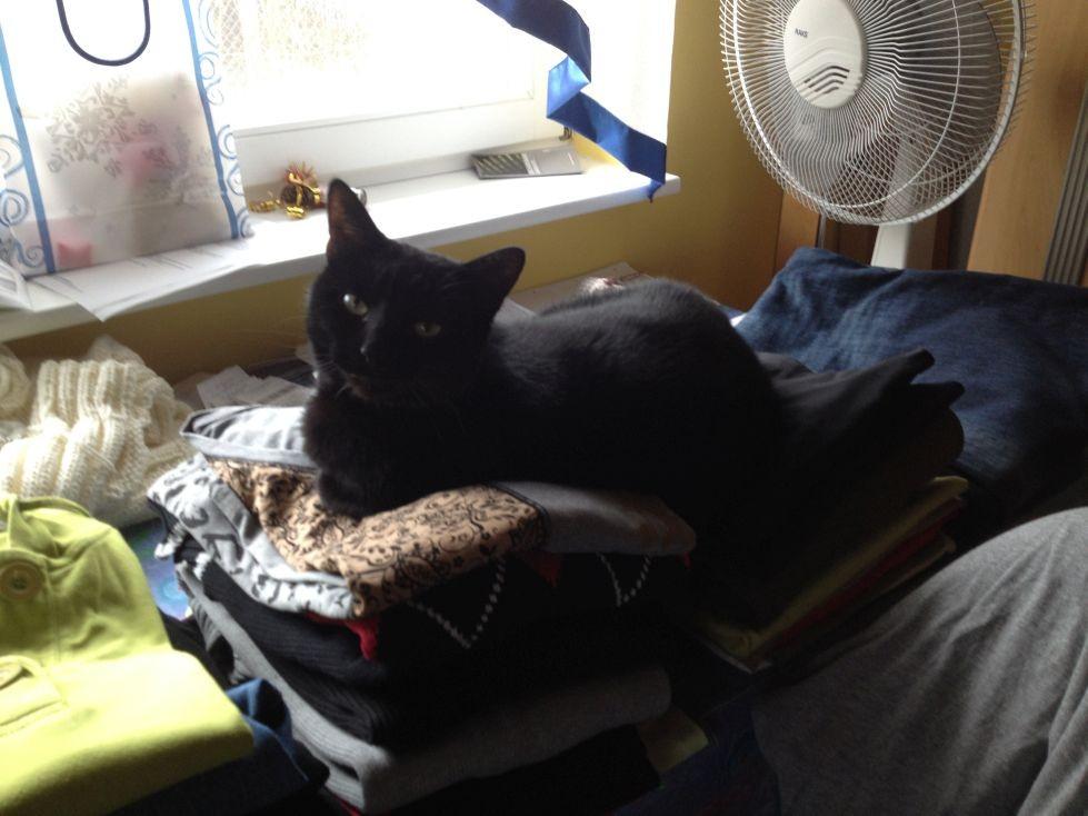 Helfen bei der Hausarbeit beim Wäsche Plattdrücken