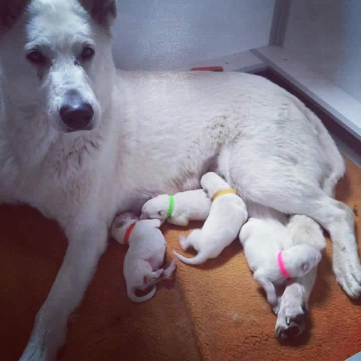 Mama Allegra mit ihren Kindern