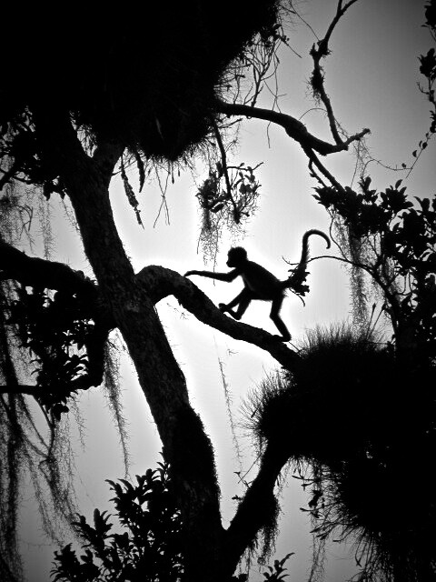 Monkey in Tikal Guatemala