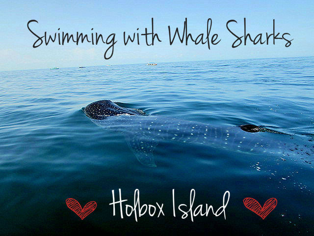 swimming with whale sharks in Isla Del Holbox, Mexico