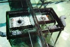 Bild: Doppelüberlaufschächte  2-er Becken.