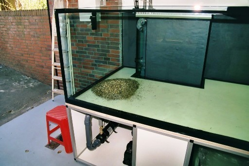 Erst recht, wenn man die Auswirkung des ersten Eimers im Aquarium betrachtet!