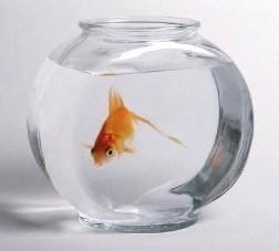 Bild: Musterbeispiel für Tierquälerei: Das Goldfischglas