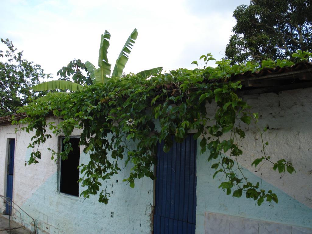 Auf dem Dach wuchs ein Teppich mit Passionsfrüchten heran.