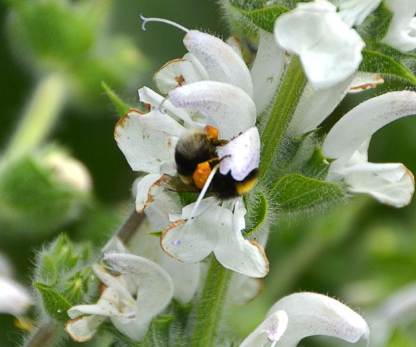 Wildbienen Im Garten