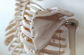 ♬ 肩甲骨の位置を戻そう!