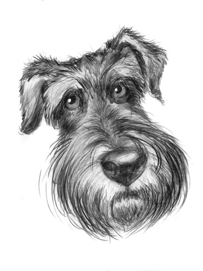 caricature de fox terrier