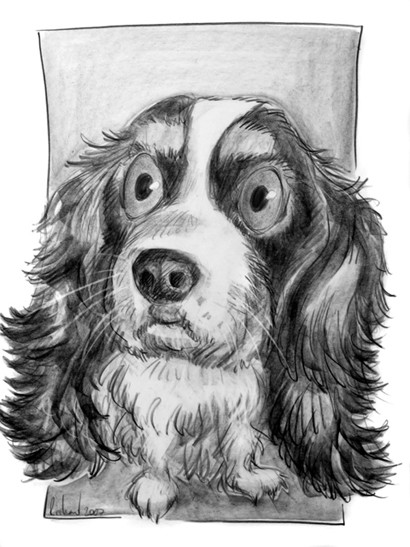 caricature de cavalier king charles