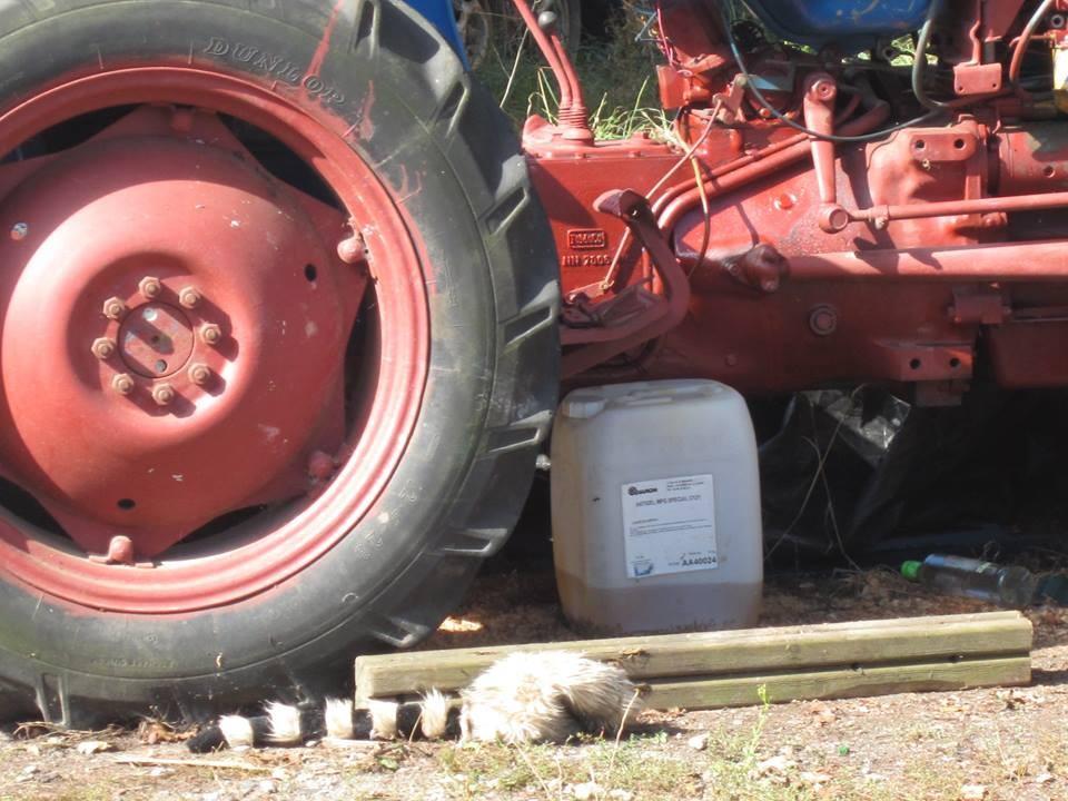 Le petit tracteur remis en marche, c'est ppratique pour bouger caravanes ou autres encombrants !!