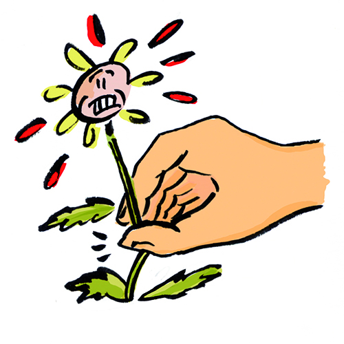 Illustration pour la Charte du Djurdjura