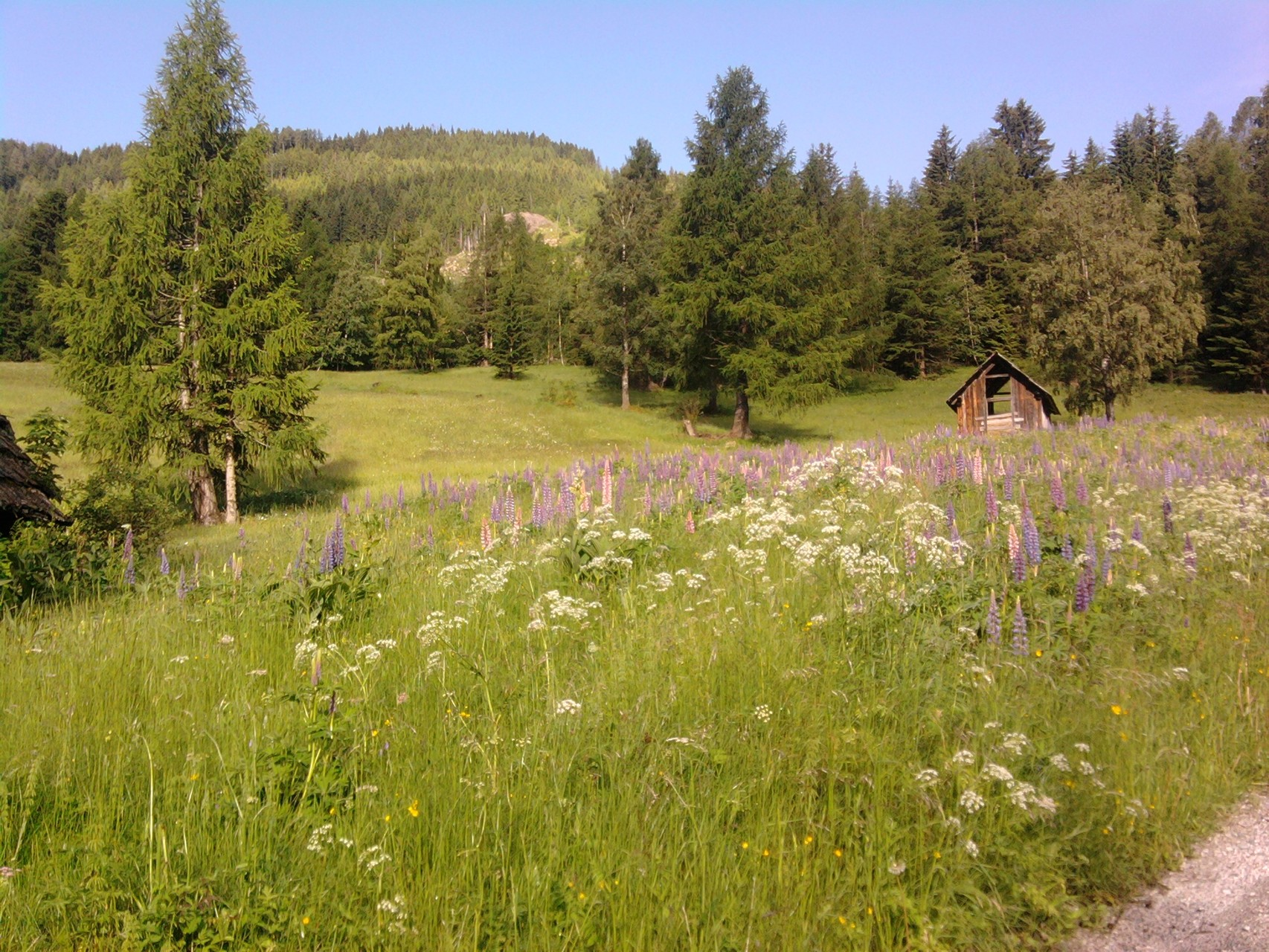 naturbelassene Sommerwiese