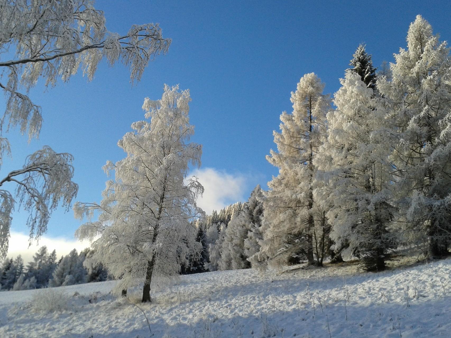 Traumhafter Ausblick auf verschneite Wiesen