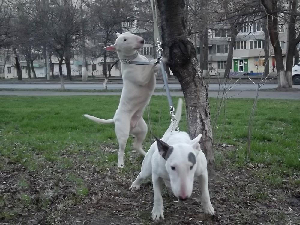 С подружкой Ханкой радуются весне ))