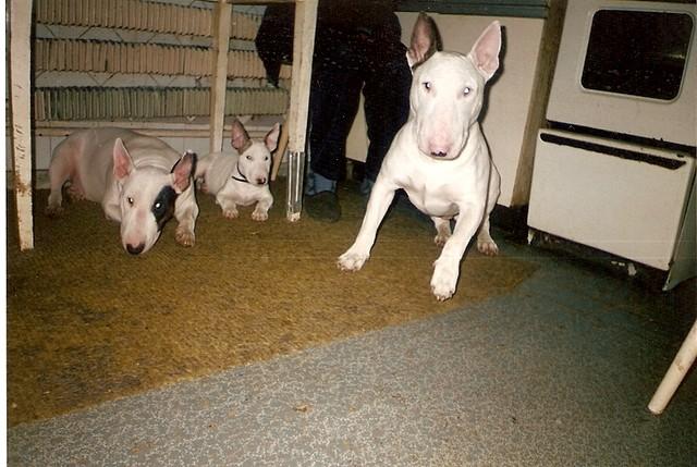 Корнет (отец), Самба (мама) и маленькая Юнна (2,5 месяца)