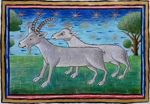 "Goat and Sheep (inspired by the ""Wolf"" at Museum Meermanno), 40cm x 27cm"