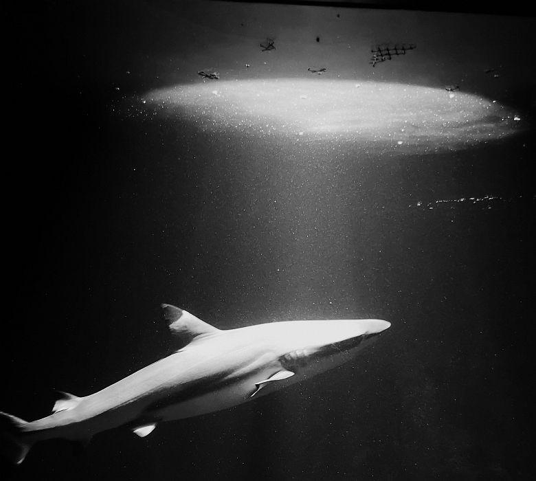 Haie im Haus des Meeres in Wien