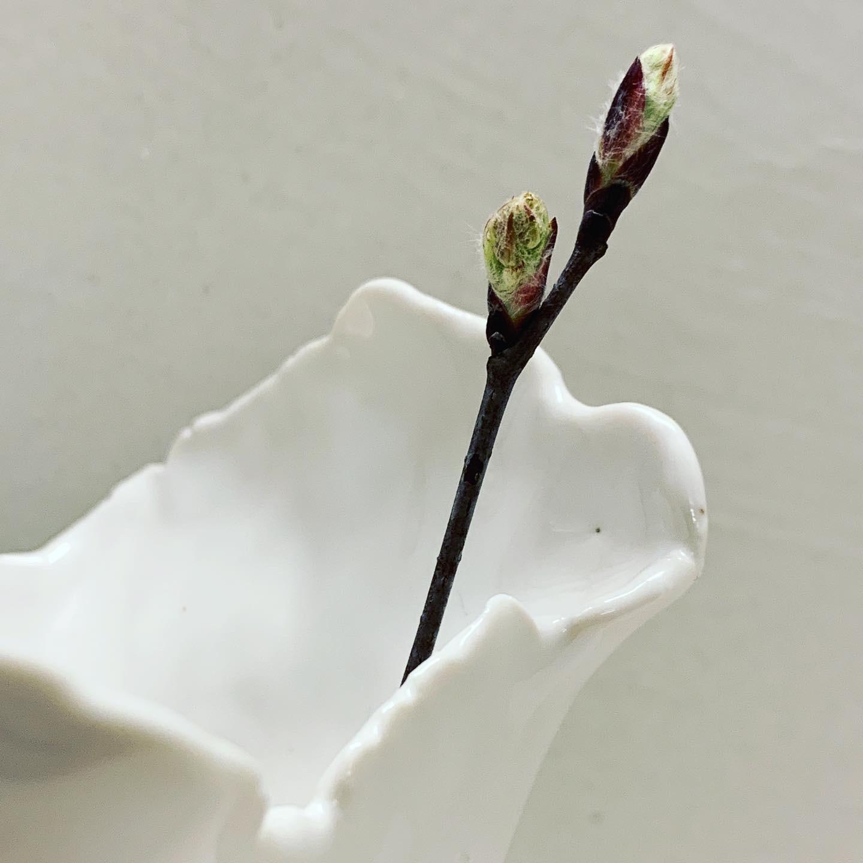 PORCELAIN CLAY - Vases