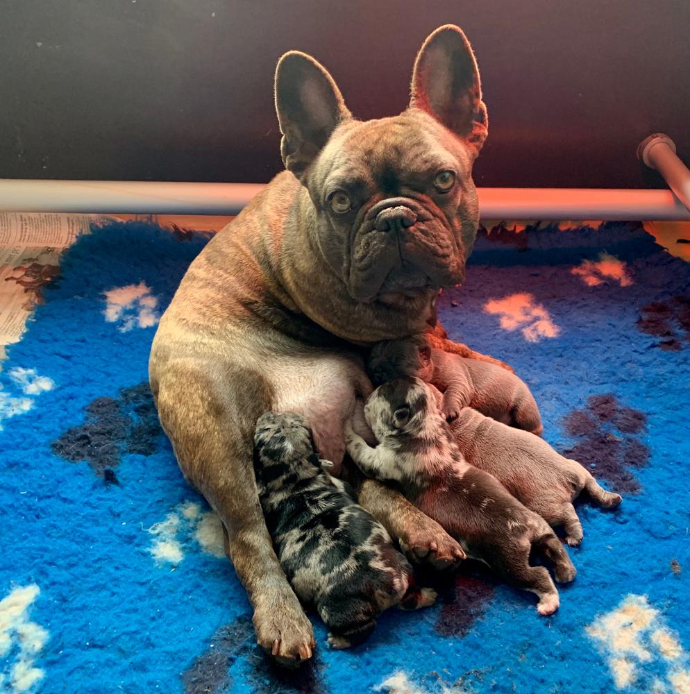 Mooie puppy's van onze lieve coeky