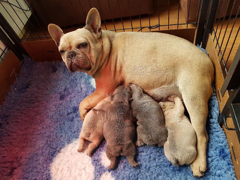 Petra met haar puppy's top moedertje