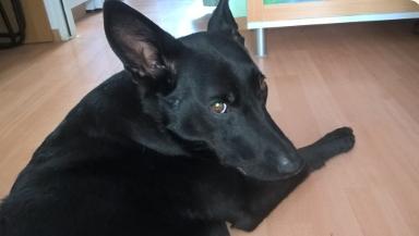 den Hund verstehen lernen Hundesprachhe, Körpersprache hund