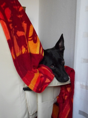 Artgerechte Tierhaltung, Tierschutz, Hundephysiotherapie Heike Amthor in Leipzig Stötteritz