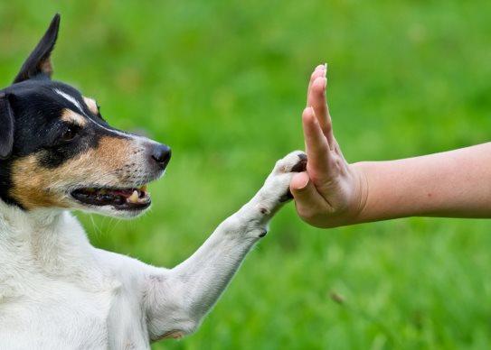 Hundephysiotherapie Heike Amthor in Leipzig Stötteritz, Krankengymnastik und Massage bei Arthrose, Hüftdysplasie, Kreuzbandriss u.a., mit Wellnessangebot für Menschen