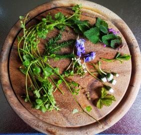 Vogelmiere, Schafgarbe, Taubnessel, Veilchen, Gänseblümchen, Brombeerblätter und Weißdorn als gesunde Nahrungsergänzung im Hundefutter