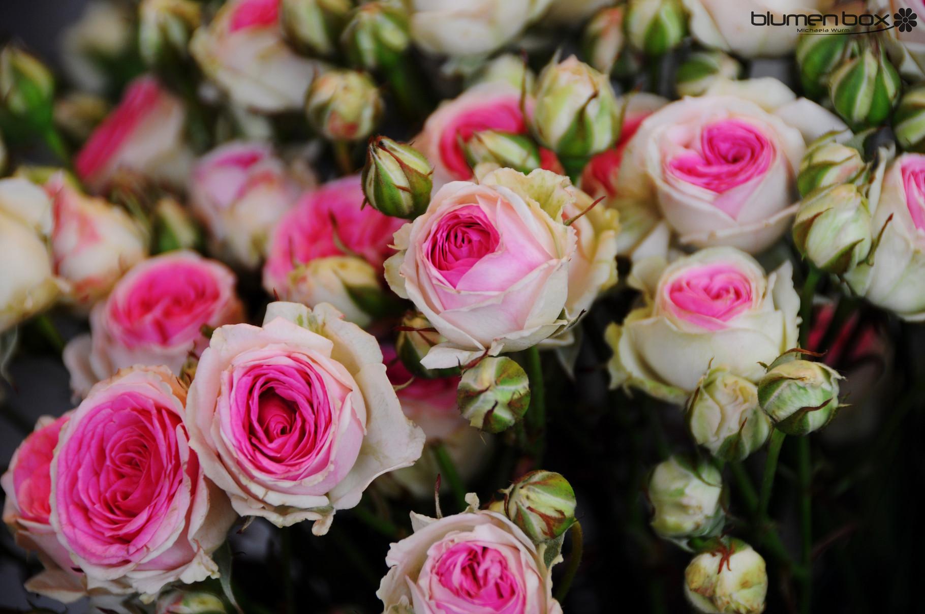 Schnittblumen - Blumenbox Schnittblumen Frische Strause Garten