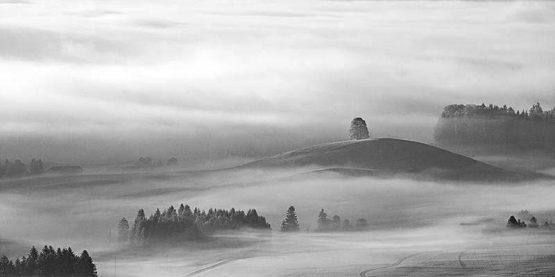Nebel im Ostallgäu