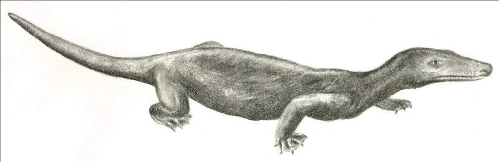 Procynosuchus, a therapsid from the Late Permian