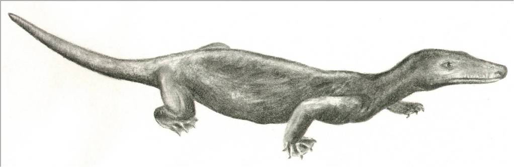 Procynosuchus, en therapsid fra seinperm