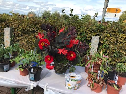 Wunderbarer Blumenstrauss von Margrith