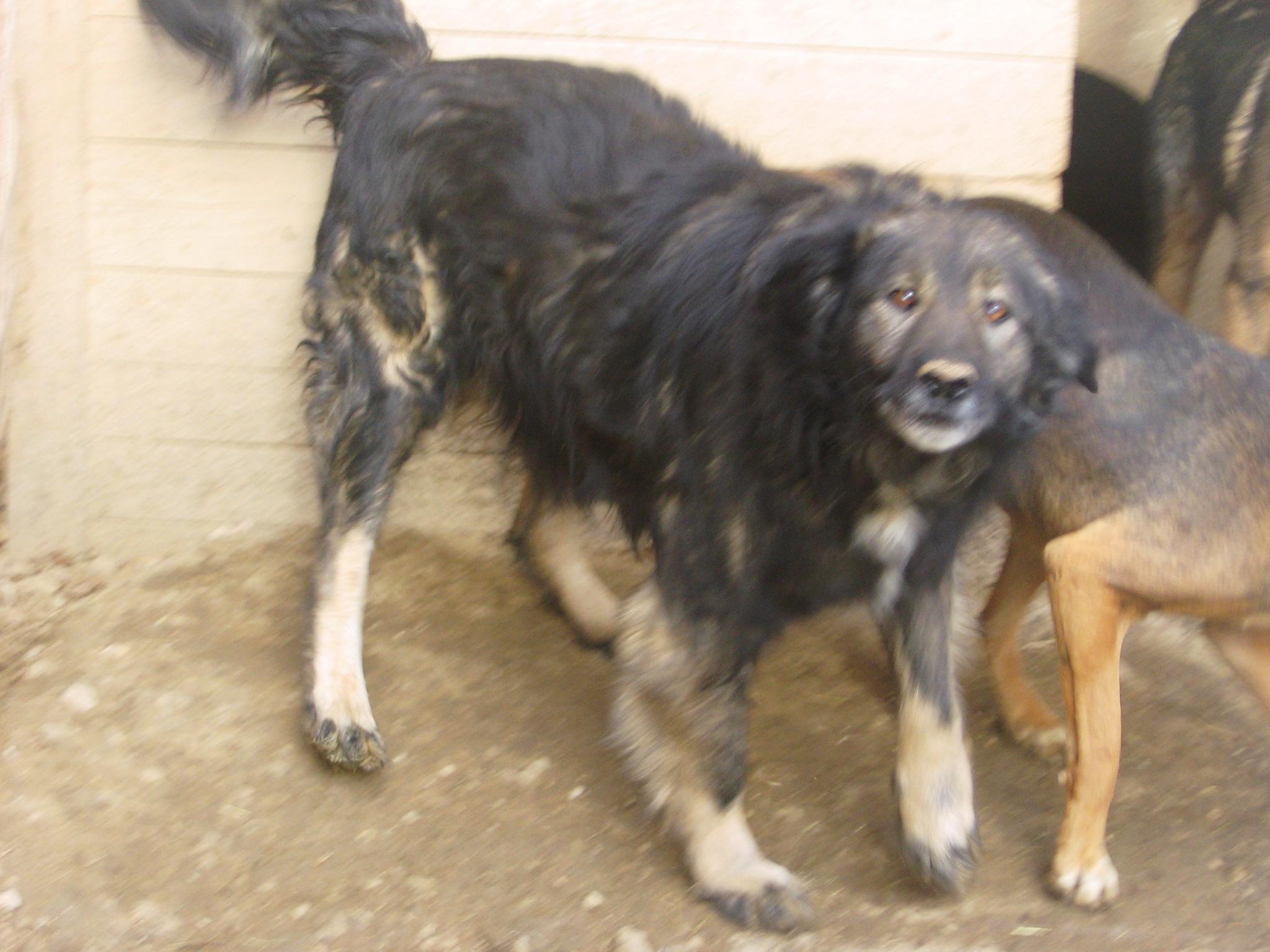 Die Hunde sind auf Hilfe angewiesen und werden trotz erschwerter Bedingungen durch Corona von Aida und Goga versorgt.