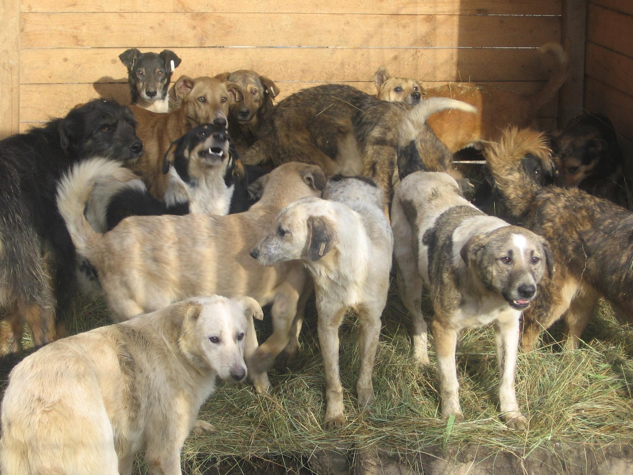 Immer frisches Stroh - so haben die 200 Tierheimbewohner den kalten Winter in Bosnien überstanden.