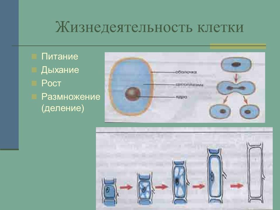 produkti-dlya-povisheniya-zhiznedeyatelnosti-spermatozoidov