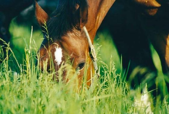 Vorsicht vor zuviel frischem Gras