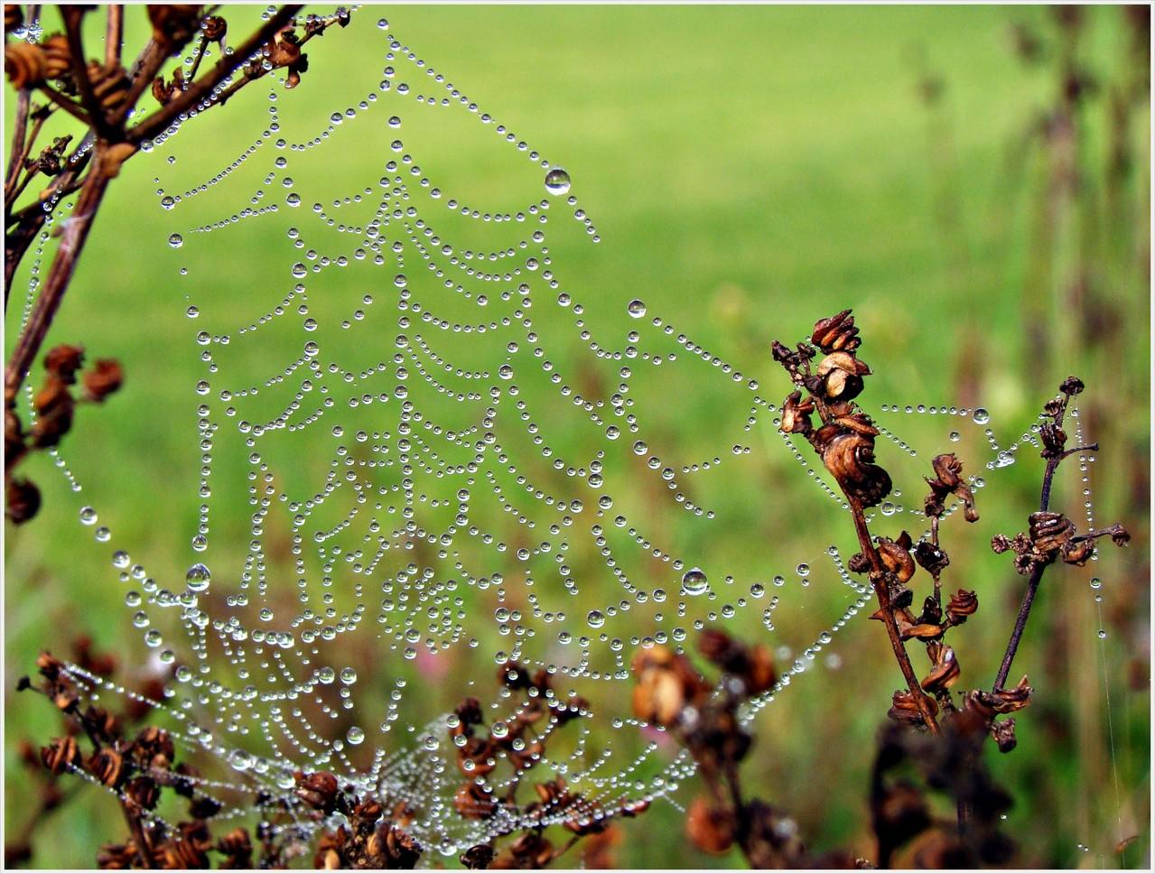 """""""Spinnennetz"""" von Kurt Oberhumer"""