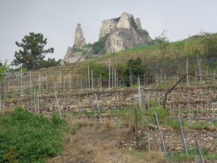 Blick zur Ruine Dürnstein