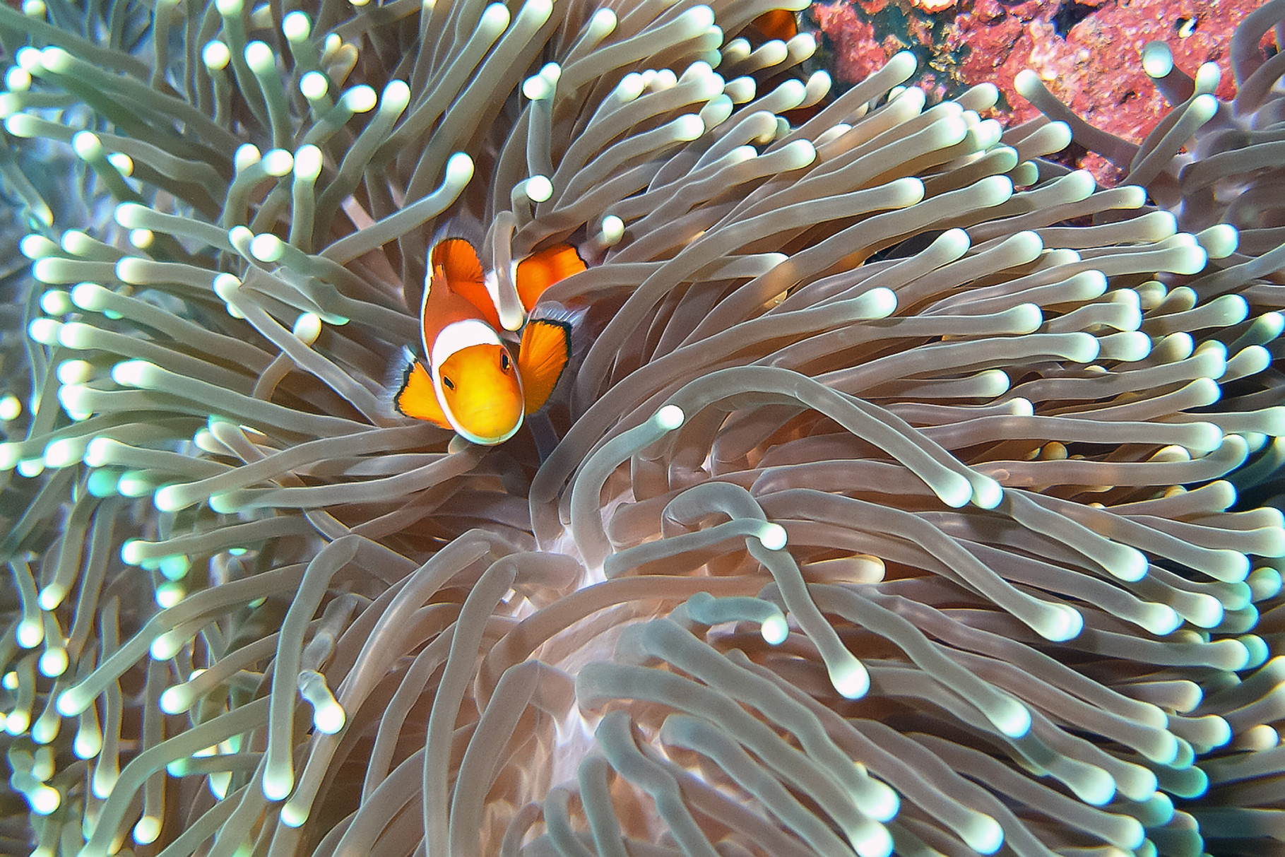 """Nemo"" v. Gerhard J. Radlinger, 1.) GW. u. 2.)EW.  25 Pkt."