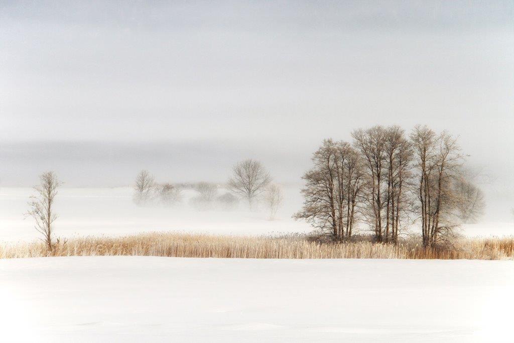 """""""Fog"""" von Josef Rath"""