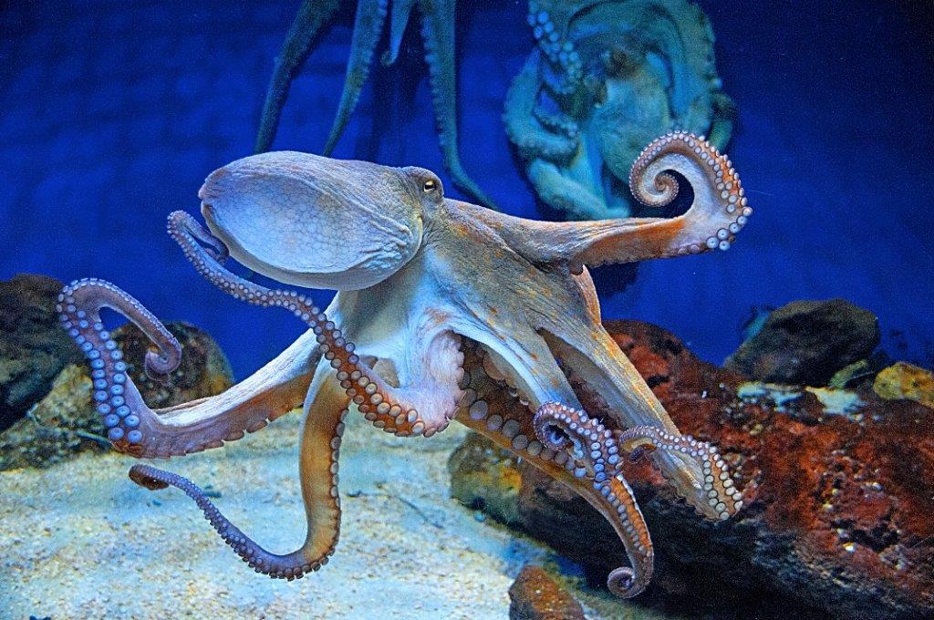"""""""Octopus"""" von Wolfgang Habringer"""