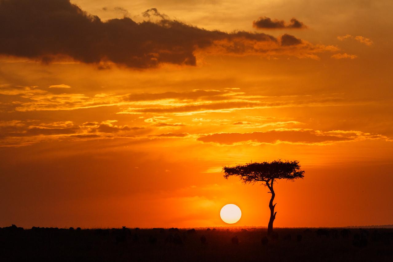 """""""Die Sonne Afrikas"""" von Erwin Mayrhofer"""