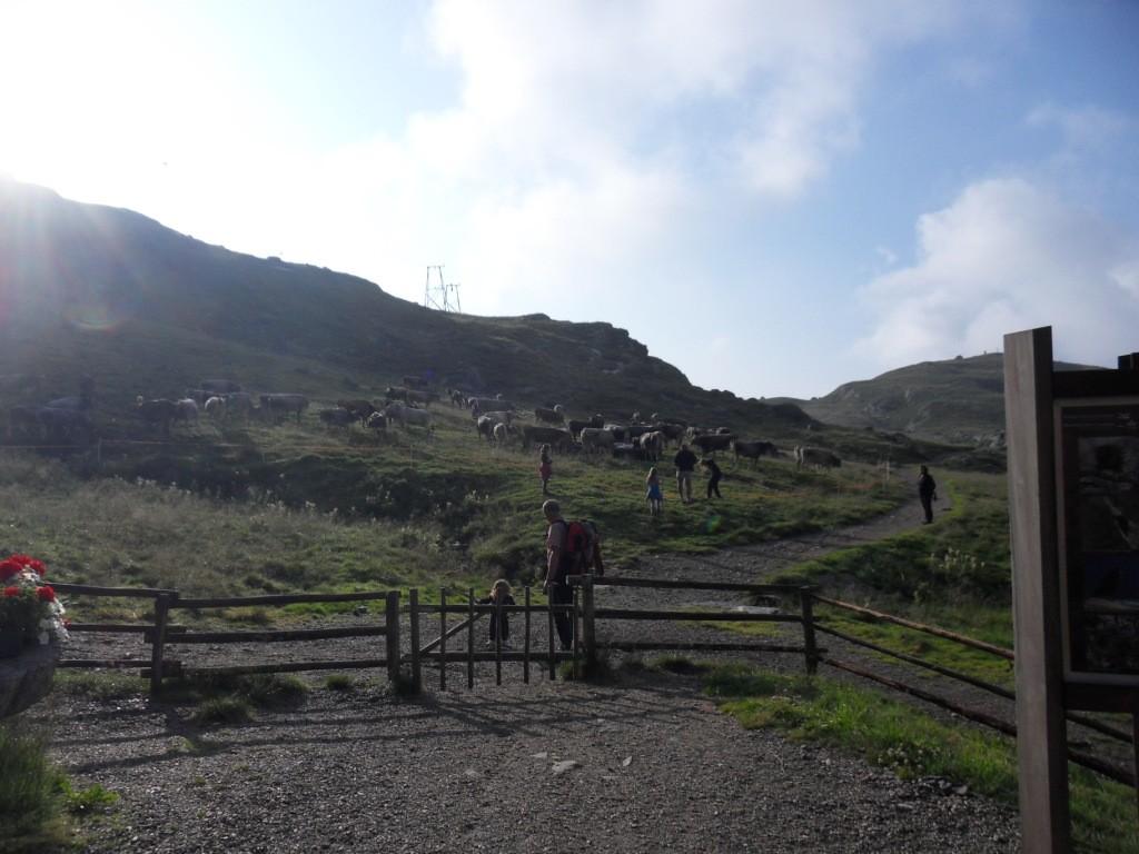 2.8.2012: Trinkpause bei Schutzhütte Oberkaser (2.131 m)