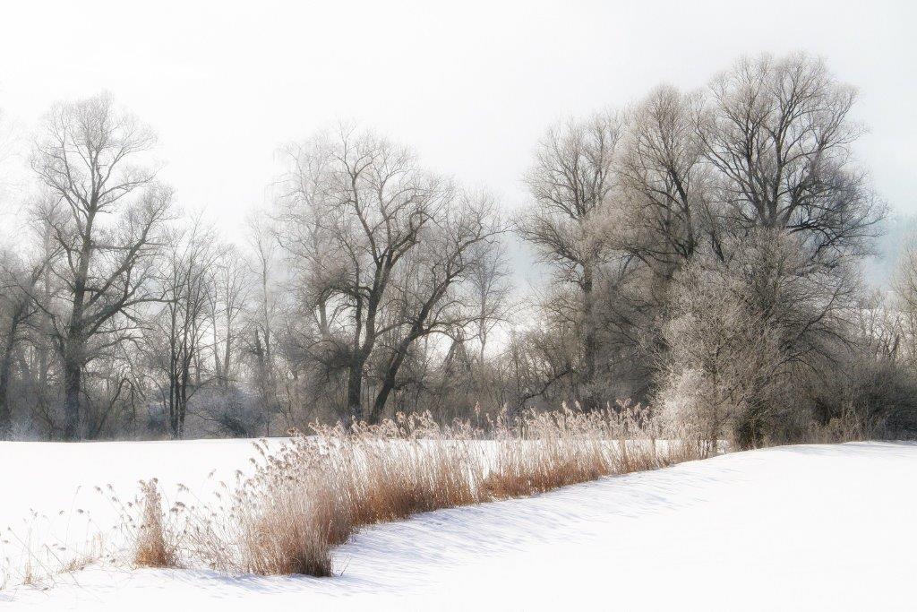 """""""Frosty"""" von Josef Rath"""