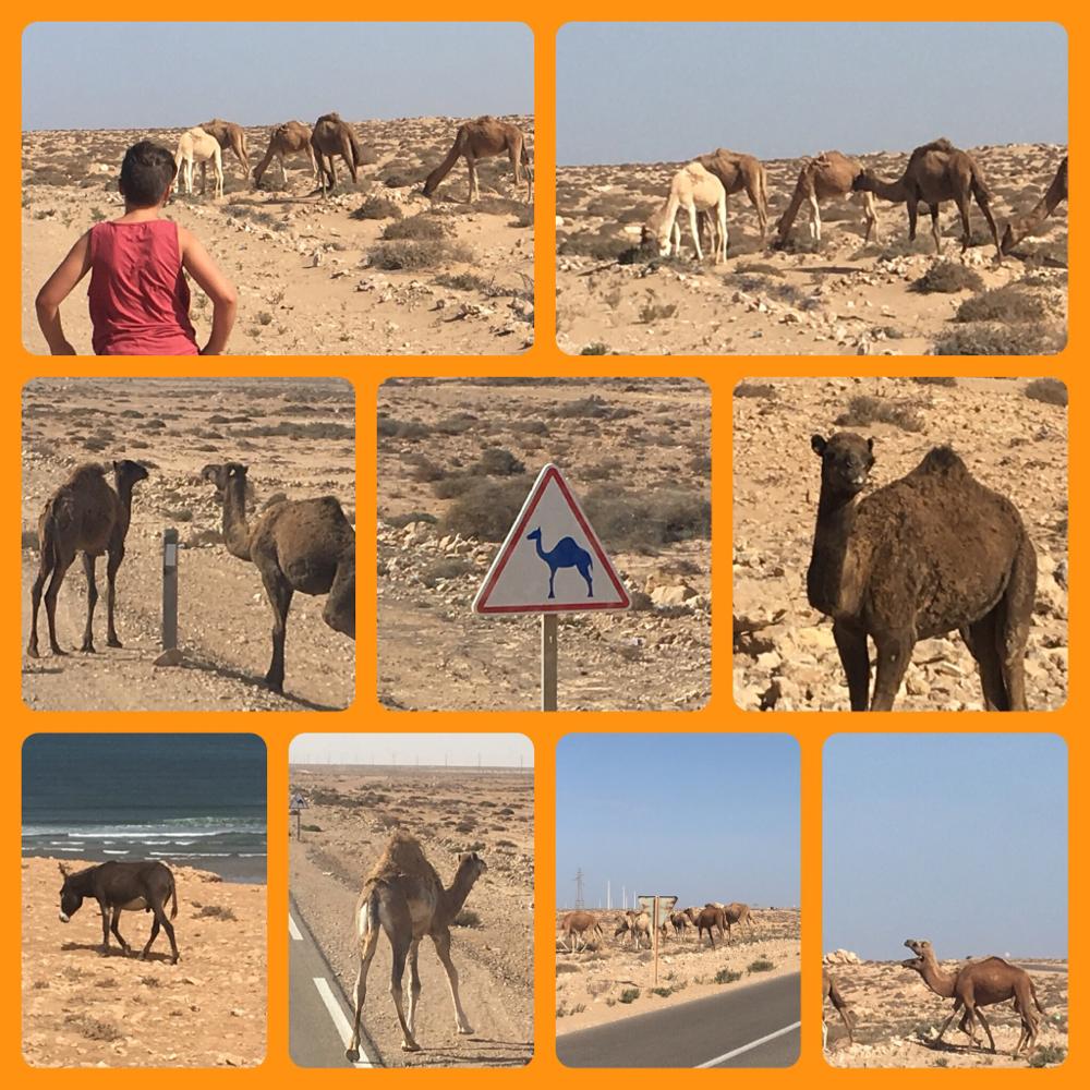 Endlich in Dakhla / Westsahara angekommen