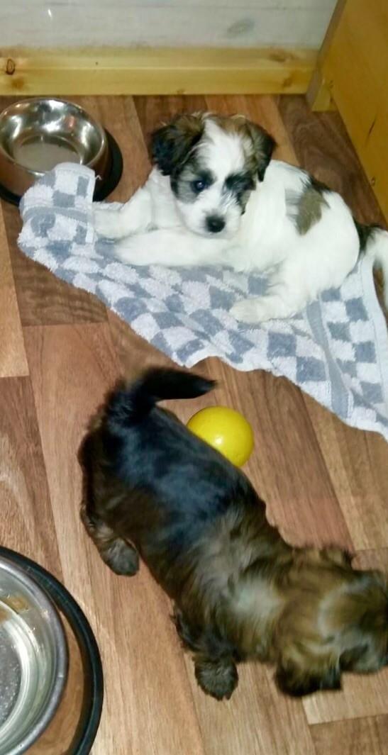 Deelayla und Luna