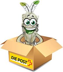 Versand weisser Salbei in der Schweiz