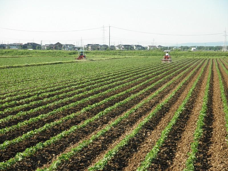 山形県  酒田管内(里のほほえみ)2013年 生育画像